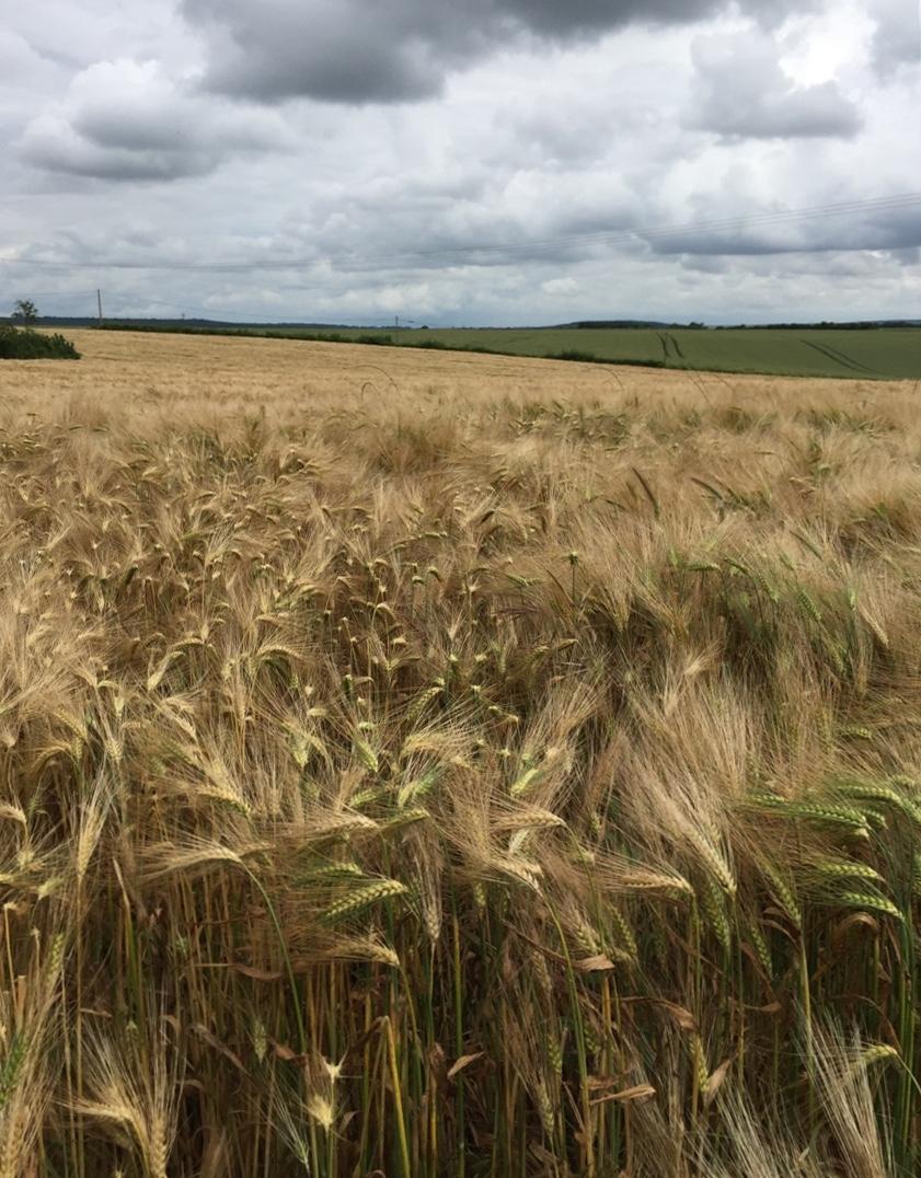 Poitou – Mélisende's ancient homeland